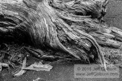 Tree Roots in Cinder - SUNSETC0232