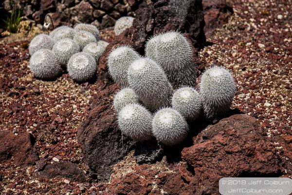 Cacti at the Huntington Library and Gardens - Huntington Library-0101