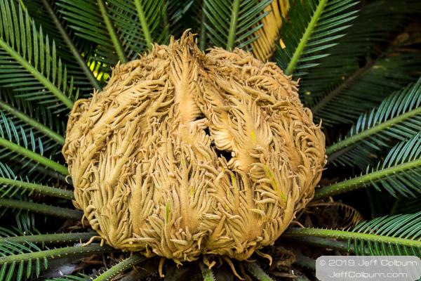Palm tree at the La Brea Tar Pits - La Brea Tar Pits-0103
