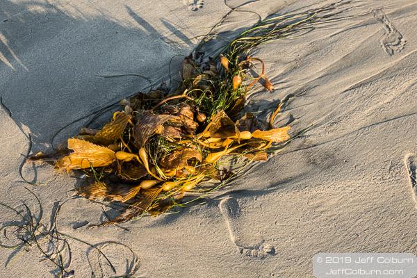 Footprint in the sand and seaweed at Laguan Beach - Laguna Beach-0128