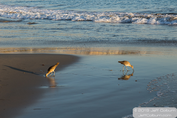 Shore birds at Laguan Beach - Laguna Beach-0167