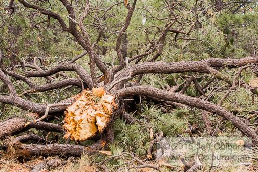 Tornado in Flagstaff - TORNADO0089