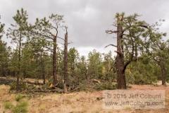 Tornado in Flagstaff - TORNADO0055