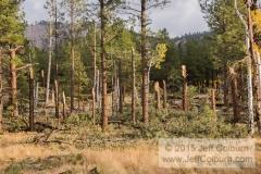 Tornado in Flagstaff - TORNADO0097