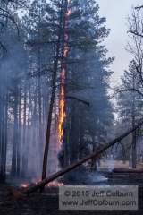 Controlled Burn - Fire0023