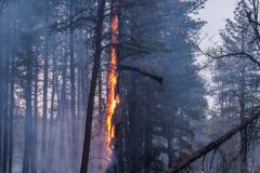 Controlled Burn - Fire0023