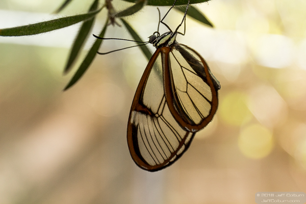 ButterflyWonderland-0273