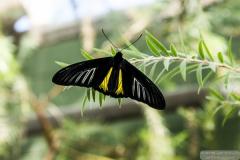 ButterflyWonderland-0300