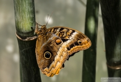 Magnificant Owl - ButterflyWonderland-0313