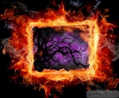 Blazing Tree - FCOL1080