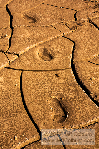 Moccasin Footprints in Mud - MUD0100