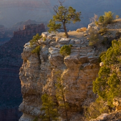 The Tree, The Grand<br/>Canyon