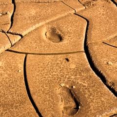 Footprints In Dried Mud