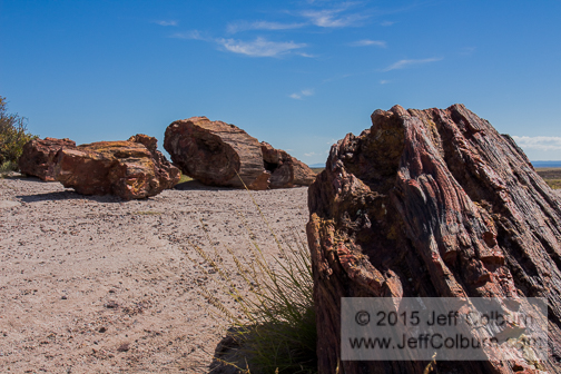 Petrified Forest - Petrified_Forest0102