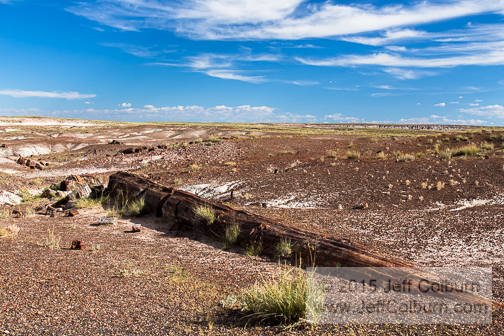 Petrified Forest - Petrified_Forest0217