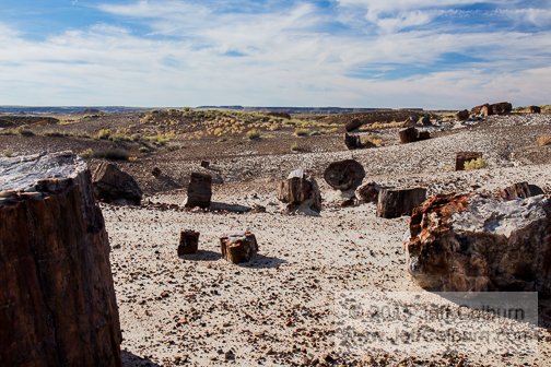 Petrified Forest - Petrified_Forest0245