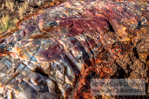 Close-up of Petrified Wood - Petrified_Forest0283