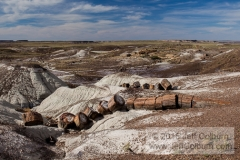 Petrified Forest - Petrified_Forest0206
