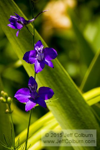 Flower - PLANT0817