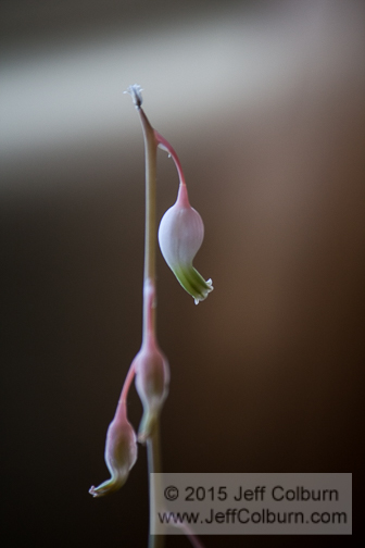 Flower - Plant0567