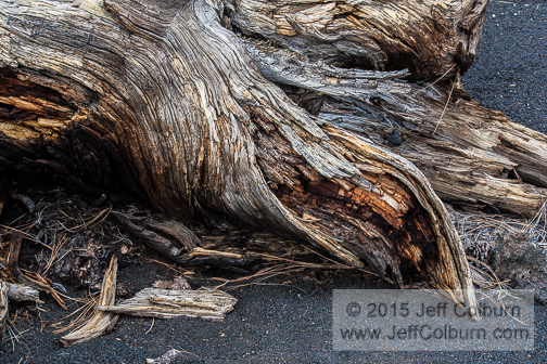 Tree Root in Cinder - Sunset Crater - SUNSETC0232