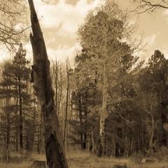 Dead Tree, Snowbowl,<br/>Flagstaff