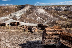 Petrified Forest 02